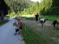 Feeding the horses :)