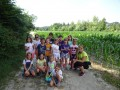 Into the cornfields